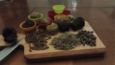 mufins aux insectes et insectes à consommer